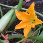 First United Methodist Church Garden Project